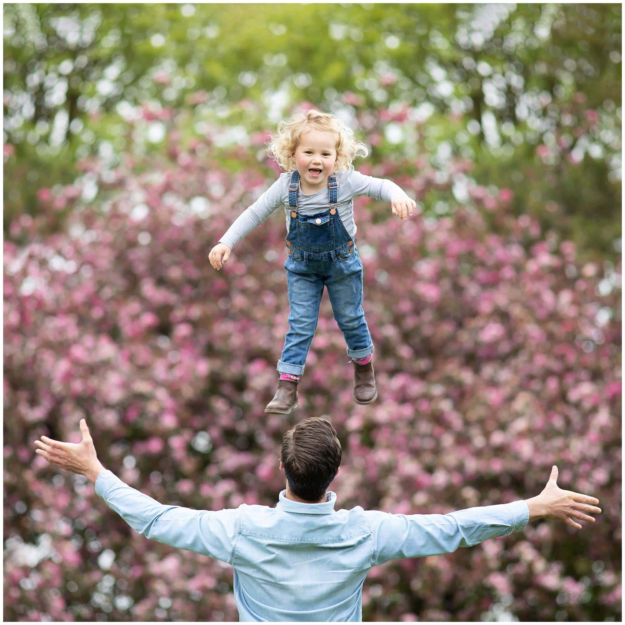 Little girl laughs as she is thrown up in the air by her Dad with a blossom tree in the background