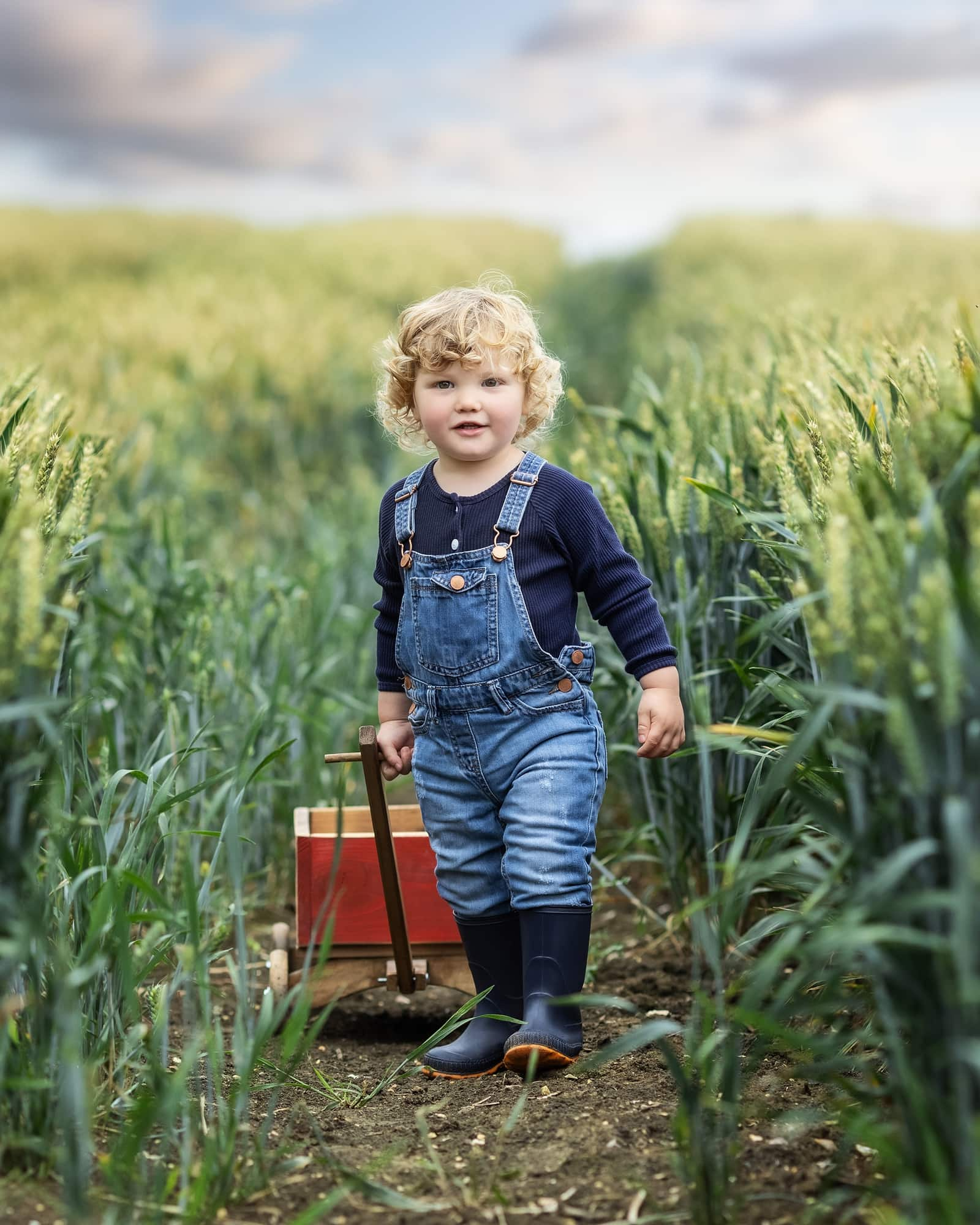 Toddler in dungarees pulls a red wagon during his Mini Photoshoot in a wheat field